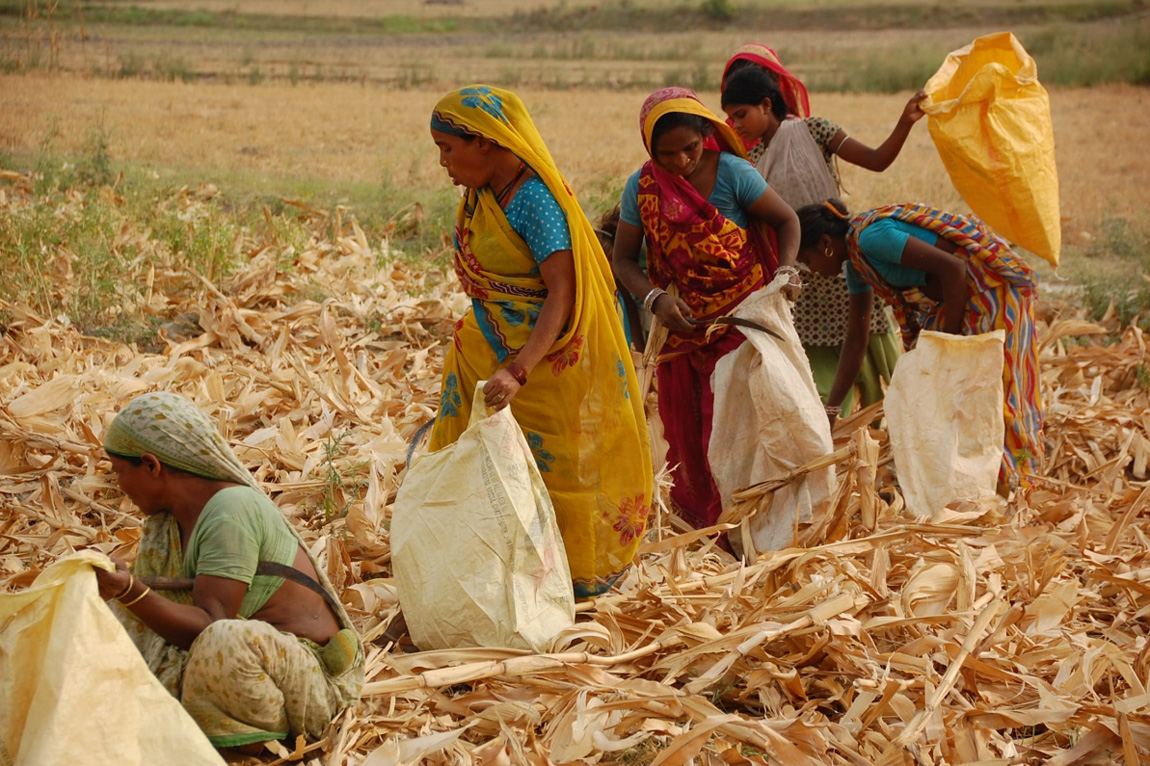 Women in Agriculture - Nayanagar in Bihar (Photo: Foundation for Agrarian Studies)